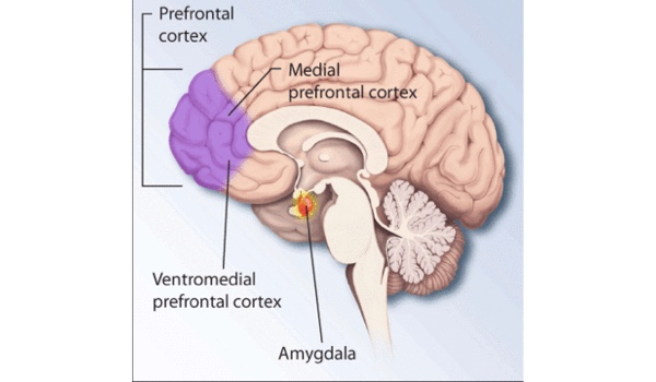 New PTSD biotypes enables improved tests, sheds light on divergent treatments efficacy
