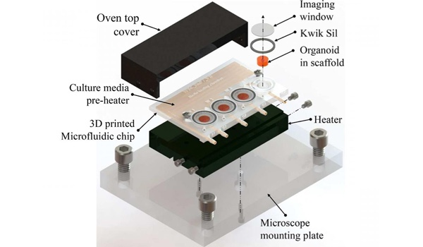 3D Printed Microfluidic Bioreactor for Brain Organoid Culture